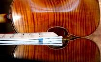 Violin_back