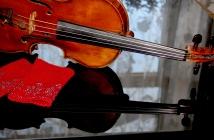 Violin_cover05
